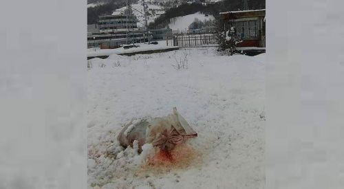 """Srebrenitsa'daki anıt mezarlığı'na """"domuz parçalı"""" saldırı"""