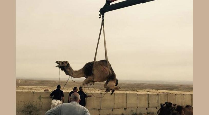 İsrail develeri de tutuklamaya başladı