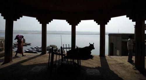 Hindistan'da inek kestikleri için 7 kişi gözaltına alındı