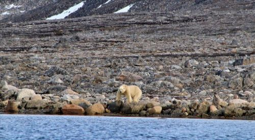 Antarktika'da rekor sıcaklık değeri