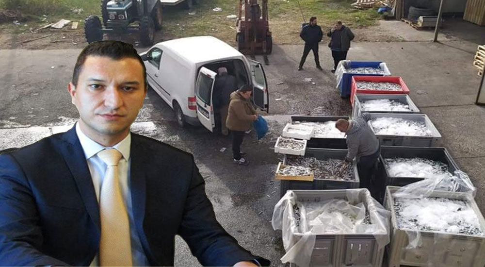 Yassıköy Belediye sakinlerine 2.8 ton hamsi dağıtılıyor