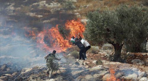 Yahudi işgalciler Batı Şeria'da Filistinlilere ait yüzlerce zeytin ağacını ateşe verdi
