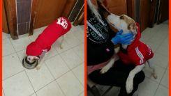 Gümülcine'de 122  sahipsiz köpek yeni bakıcılarına kavuştu