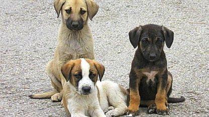 Yassıköy Belediyesi sokak hayvanları barınağı inşa edecek