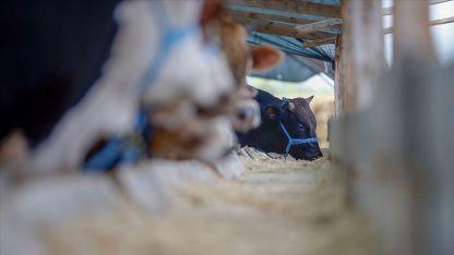 Eyalet hayvan besicilerinden Tarım Bakanına çağrı