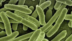 Bilim insanları binlerce yıllık buzda 28 yeni virüs keşfetti