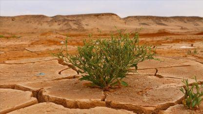 Küresel iklim değişikliği su kaynaklarını savaş hatlarına dönüştürüyor