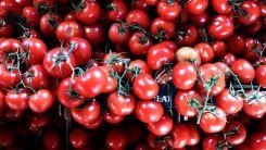 Ρεκόρ στις εξαγωγές φρούτων και λαχανικών στην Τουρκία
