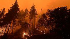 Dünya genelinde orman yangınları ile mücadele devam ediyor