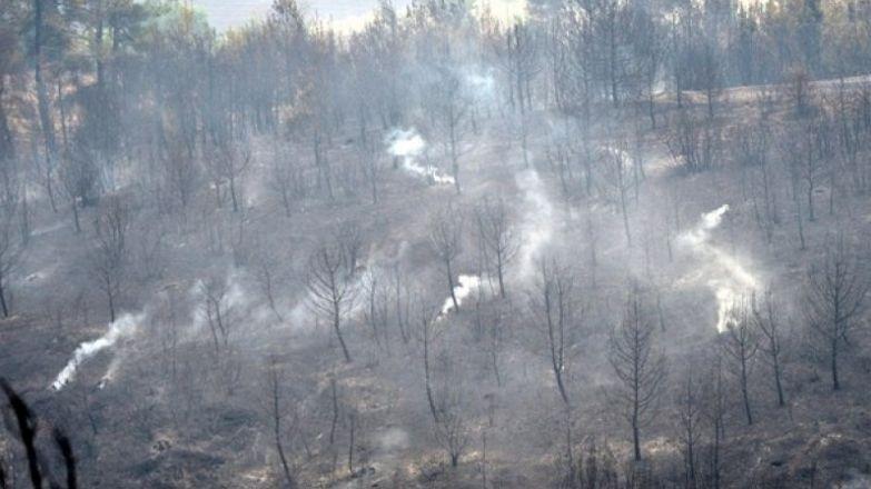 Attika bölgesinde iki günde 90 bin dönüm arazi kül oldu
