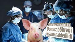 Genetiğiyle oynanmış bir domuzun böbreği insana nakledildi
