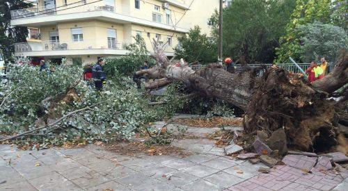 Fırtına Gümülcine'de Ağaçları Devirdi