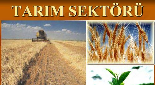 Yunanistan'da Tarım Sektörünün İş İmkanı Sağlayacağı 10 İhtisas Alanı