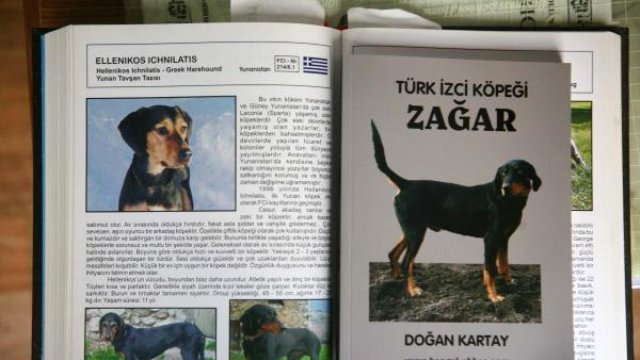 Yunanistan'a 'Zağar' Köpeği Tepkisi